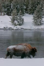 WinterPark9